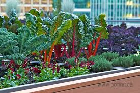 the vancouver club rooftop garden