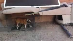 Are Igloo Dog Houses Warm Built A Dog House For My Bulldog Youtube