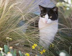 saving albuquerque u0027s community cats petsmart charities