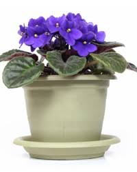 Indoor House Plants Low Light Dress Up Your Home With These Indoor Plants That Don U0027t Need