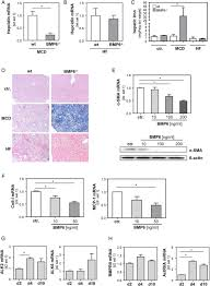 enhanced expression of bmp6 inhibits hepatic fibrosis in non