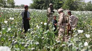 Opium The Dea U0027s Opium War With The Taliban Motherboard
