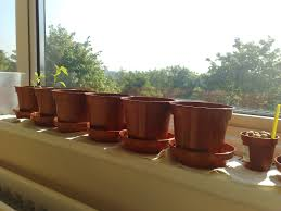 Window Box For Herbs Growing Herbs Indoors