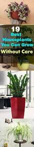 Best Indoor House Plants 19 Best Houseplants You Can Grow Without Care Houseplant