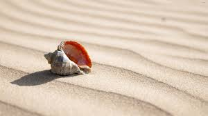 shell wallpaper shell on the sand wallpaper photography wallpapers 50811