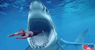Shark Attack Meme - great white shark attack gif pics ngiggles com