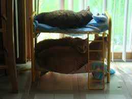 Bunk Beds For Three My Dad Built My Sister U0027s Cats Bunk Beds And They Actually Use