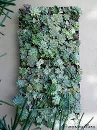 Vertical Gardens Miami - best 25 succulent wall gardens ideas on pinterest succulent
