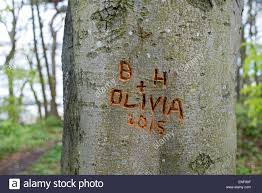initials carved in tree initials name and date carved into the bark of a tree in woods