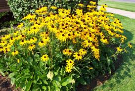 native plants of ohio go native consider native plants for a low maintenance garden