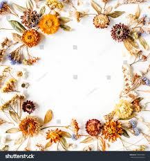 frame made yellow dry flowers branches stock photo 558053284