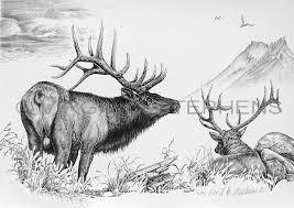 wildlife pencil drawings of elk deer bear and other wildlife