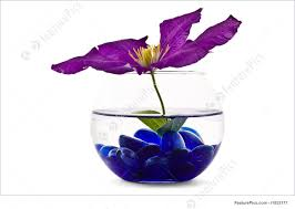 Decorative Flowers by Picture Of Decorative Flowers In Glass Vase