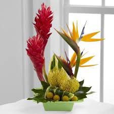 birds of paradise flower illinois florist fabbrinis flowers birds of paradise