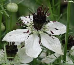 55 best my own garden seeds for 2013 images on pinterest garden