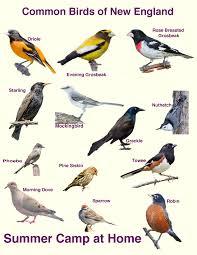 ergonomic bird feeder birds identification 114 bird feeder birds