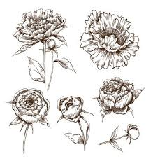 peony flower drawing best 25 peony drawing ideas on pinterest