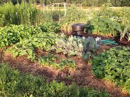 garden layout gardening matters