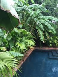pool fã r balkon 151 best swimming pools images on tropical gardens