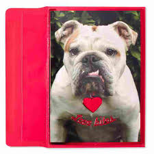 bulldog with collar s day cards papyrus