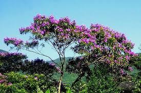 native georgia flowering trees related keywords u0026 suggestions