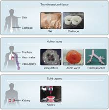 3d bioprinting of tissues and organs nature biotechnology