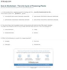 quiz u0026 worksheet the life cycle of flowering plants study com