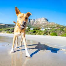 Make Bathtime Fun For Your Dog Blog Earthbath