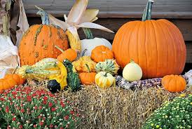 Corn Stalk Decoration Ideas Yaegers Farm Market Has All Your Fall Needs Dekalb County Online