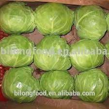 cabbage china fresh green cabbage from new crop of 2018 china origin