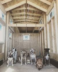 tinyhouseblog how many dogs fit in a tiny house happy sunday thow tinyhouse