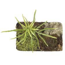 science live materials plants terrarium sets nasco