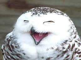 Owl Memes - you need to be aware of the little girl and the owl internet meme