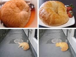 Croissant Meme - video cats morphing into croissants serious eats