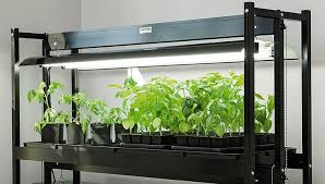 what is the best lighting for growing indoor how to choose an led grow light gardener s supply