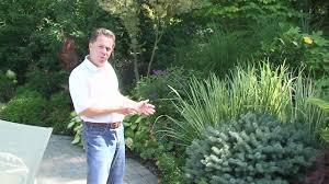 deer resistant plants nj winter garden plants how to select