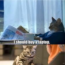 Cat Laptop Meme - sophisticated cat buys a laptop by discords14th meme center