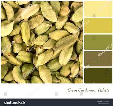 background green cardamom pods colour palette stock photo