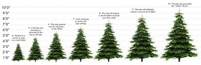 real christmas tree size guide crimbotrees scotland