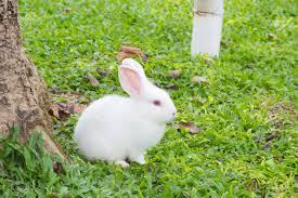 rabbit garden white rabbit on the grass in the garden royalty vrije foto
