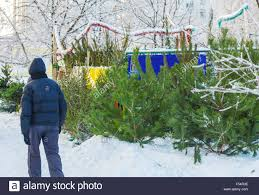 outdoor selling of trees stock photo royalty free image