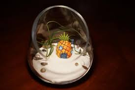 sand terrarium with air plant and shells stock photo image 61406350