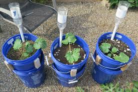 sip basics self watering sub irrigated planter gardening