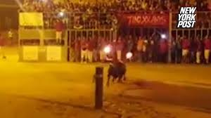 bull commits after men light its horns on fire new york post