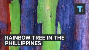 rainbow tree from the philippines youtube