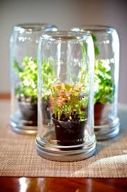 learning the basics of owning a terrarium