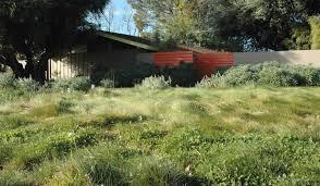 california drought resistant grass california native garden