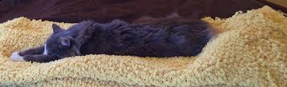 pet euthanasia welcome to home pet euthanasia of southern california home pet