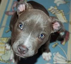 bluetick coonhound mix puppies 104 best i u0027m in coondog heaven images on pinterest kennel ideas