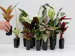 indoor plans indoor plants greenify your home buy indoor plants plants in a box
